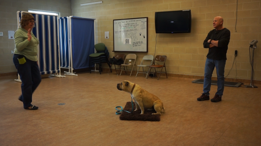 Student training dog to stay from 8 feet away - JSDT1