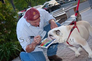 Hands On Dog Trainer Certification Course In New Jersey
