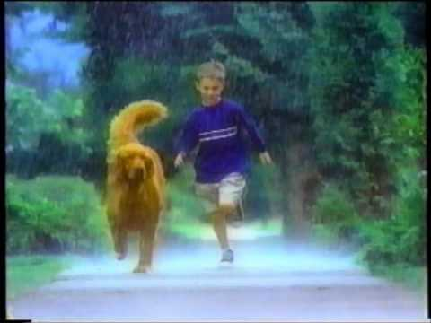 Dog Commercials Joel Has Trained Dogs For