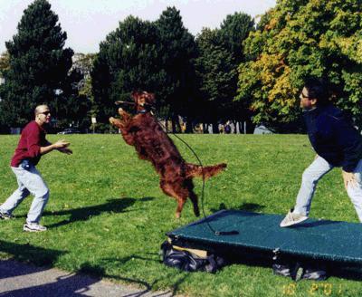 Joel Silverman On The Set Training Dogs