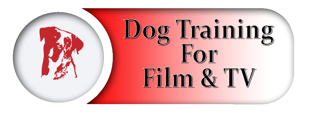 Dog Training Course For Film And TV