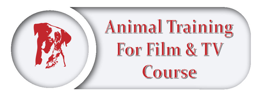 Film And Tv Dog Training Course